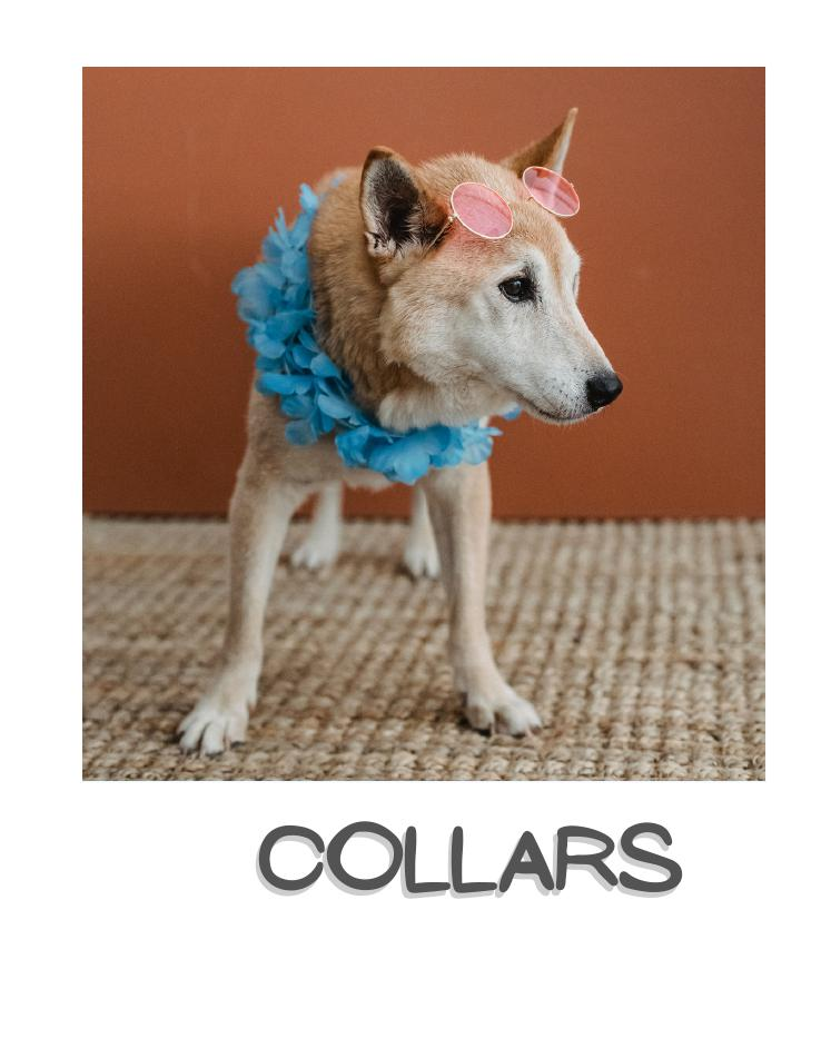 Dog collar,leashes & harnesses