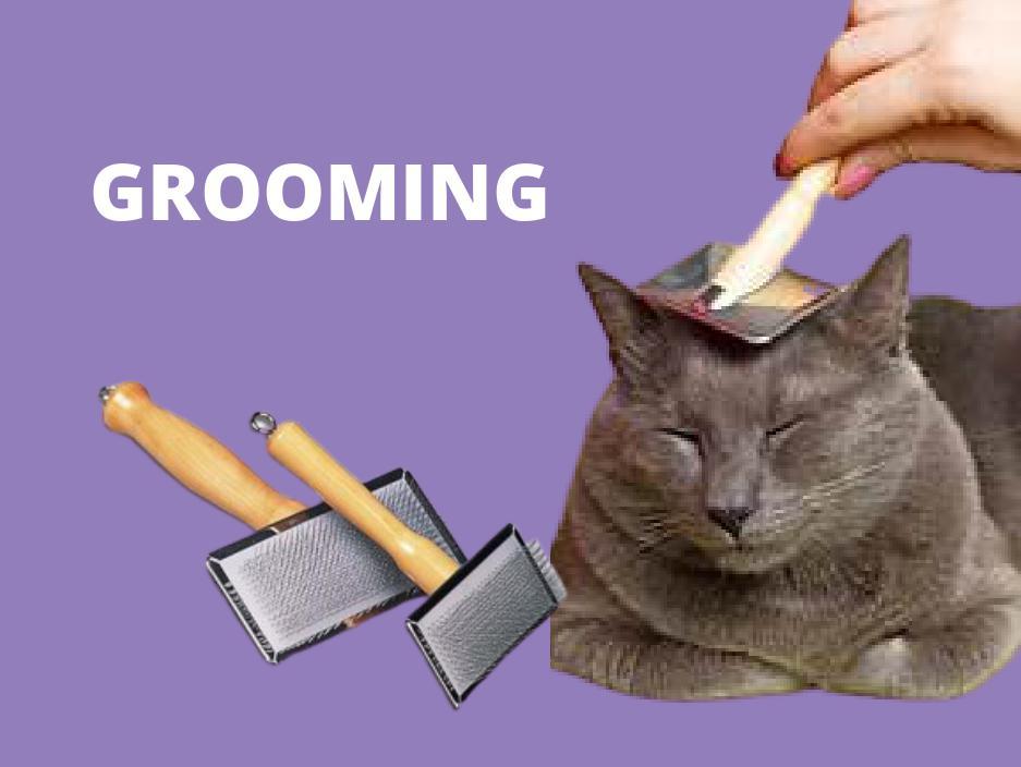 cat grooming bathing