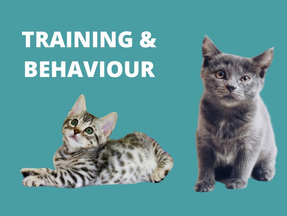 cat training behavior