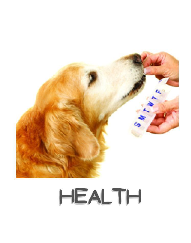 dog health wellness