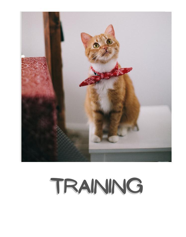 Cat training & behavior
